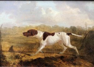 Hancock's Hunting Dog. The dog points to a target out of frame. The background is a forested marsh.